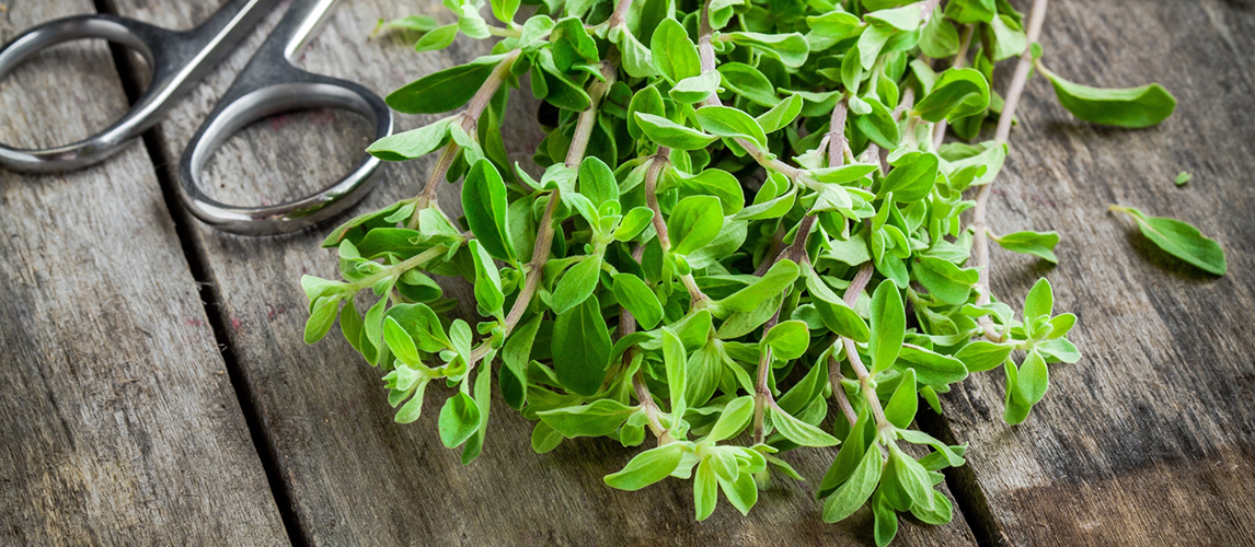 what is marjoram uses and benefits