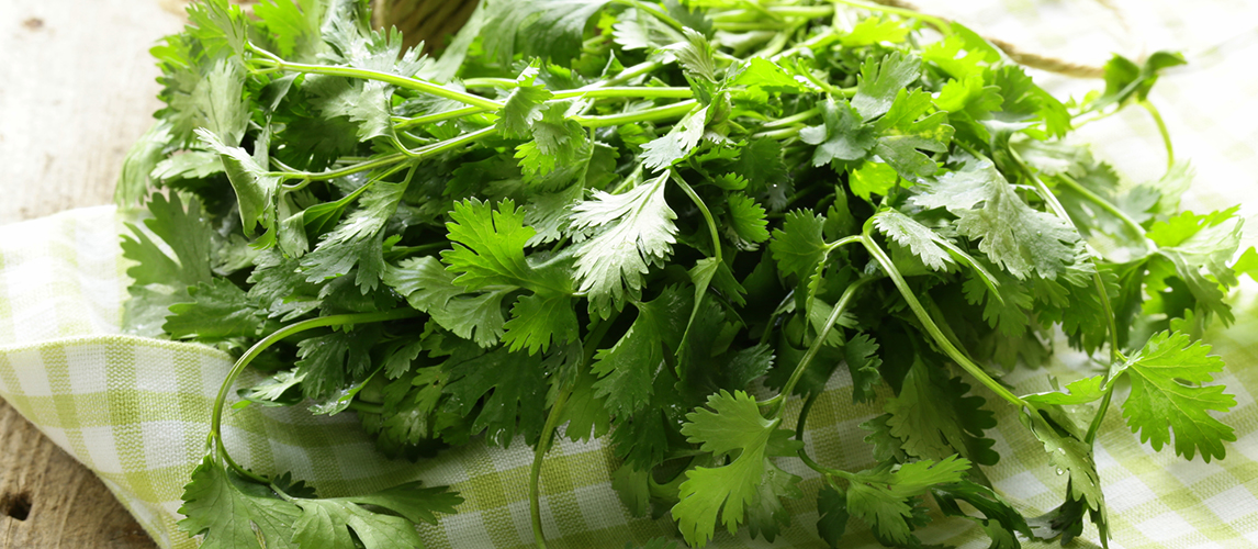 cilantro vs parsley what's the difference
