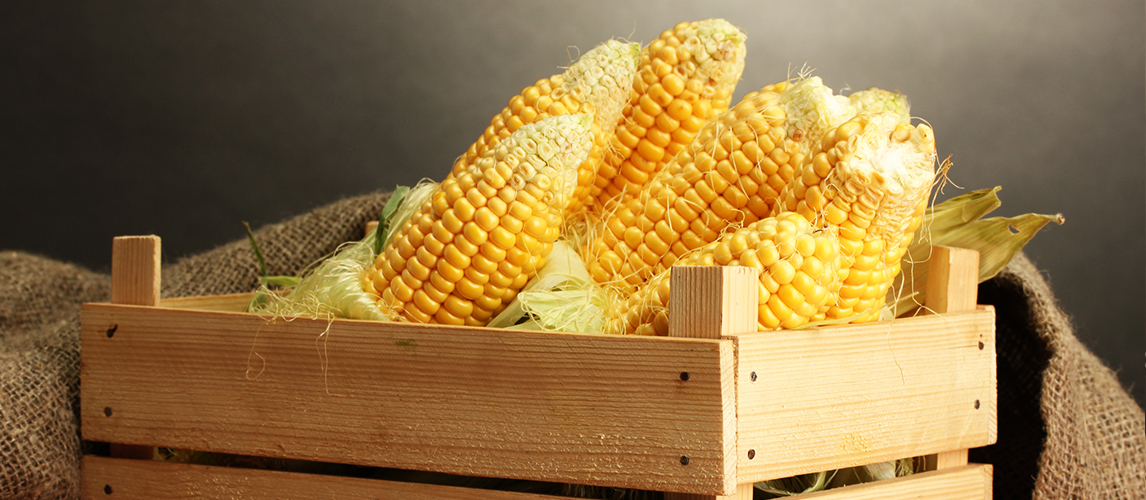 different types of corn the ultimate guide